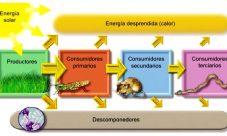 Flujo de la energía en los ecosistemas