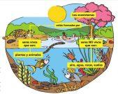 ¿Cómo funciona un ecosistema?