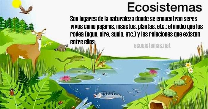 Qué es un ecosistema (para niños)