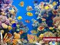 ¿Qué es un ecosistema acuático?