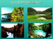 ¿Qué es un ecosistema mixto?