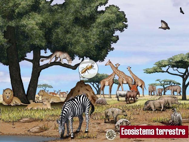 ¿Qué es un ecosistema terrestre?