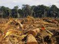 Alteración de los ecosistemas