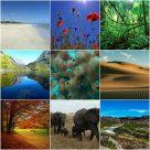 Características de los ecosistemas