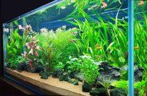 ¿Qué son los ecosistemas artificiales?