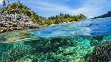 Tipos de ecosistemas acuáticos